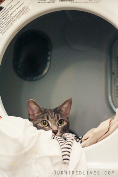 Laundry Kitty Love